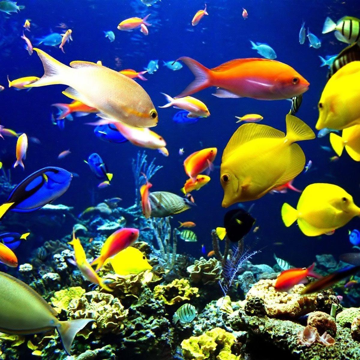 tanti_pesci_colorati